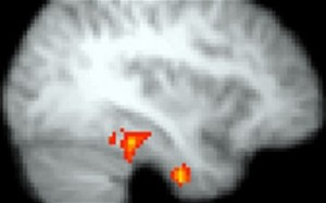 Scans of brain activity show intense electrical activity when reading challenging literature