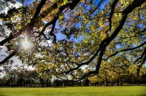 Trees in Calderstones park c Dave Jones